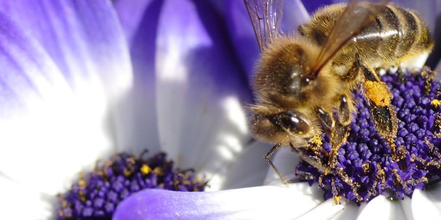 Fête de l'abeille et de l'environnement 2018 - ECOMUSEE DU PERCHE