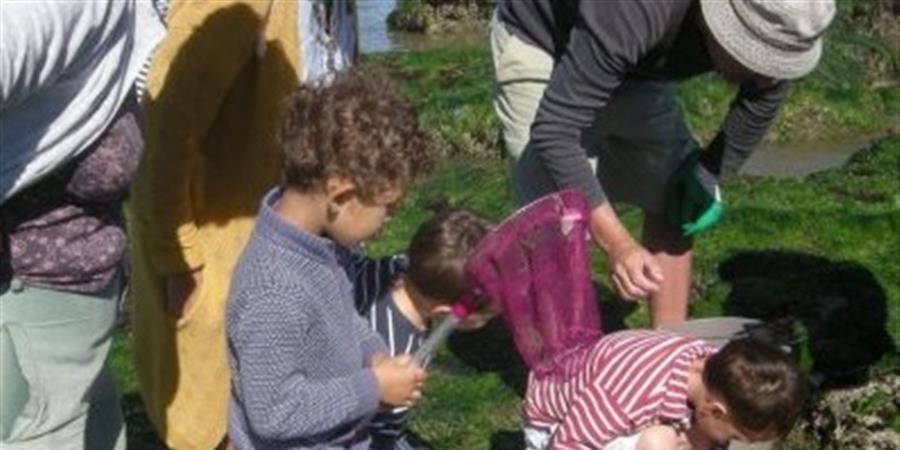 A la découverte des algues à préfailles - 2709-9h30 - Association Hirondelle