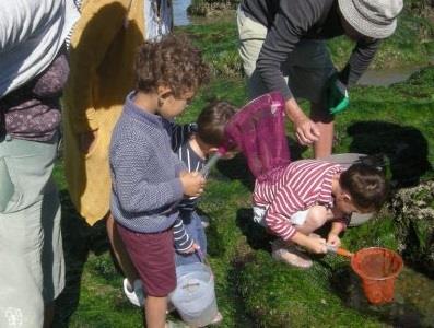 A la découverte des algues à préfailles - Association Hirondelle