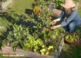 Journée d'introduction au jardinage en carréS - École du Jardinage en Carrés - Centre d'agro-écologie