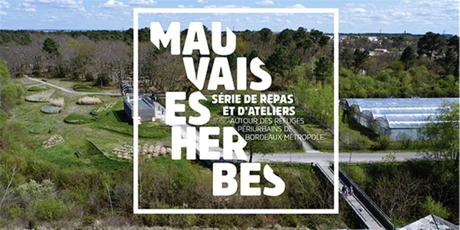 Mauvaises Herbes - Saint Médard - Le Rituel