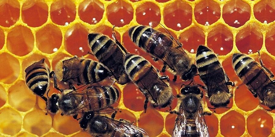 Atelier : Initiation à l'apiculture - FERME D'ECANCOURT