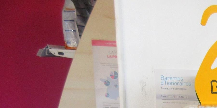 Vente à distance de Blé de Noël pour l'Ecole du Chat Libre de Berre l'Etang - L'Ecole du Chat Libre de Berre l'Etang