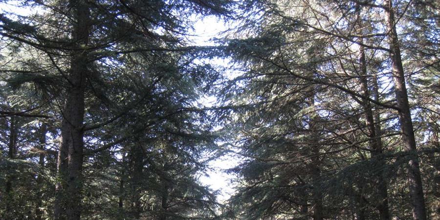 """Journée d'information """"Obligations réelles environnementales"""" - Forêt Méditerranéenne"""
