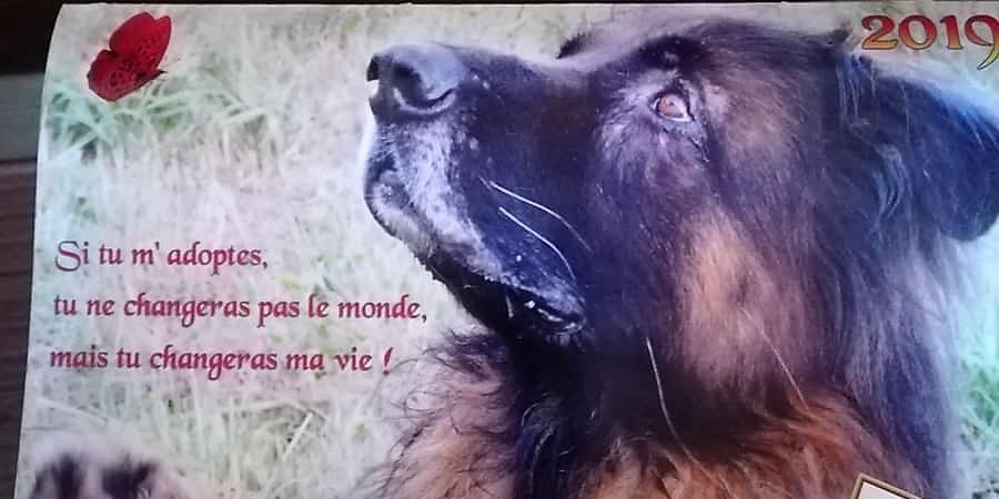 NOS CALENDRIERS 2019 SONT ARRIVES !  - Refuge Annie-Claude MINIAU - ADPA