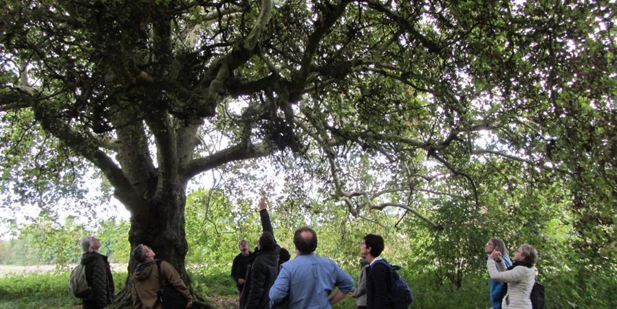 ArboFormation : Reconnaitre les arbres 4 juin 2020 - CAUE 77
