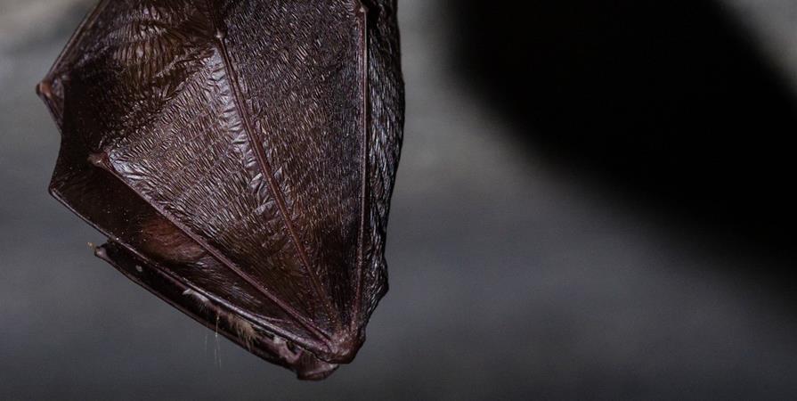 Conférence : A la découverte des chauves-souris - La ferme de la Croix-Rousse