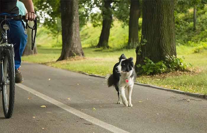 Désensibilisation aux vélos - Instant canin