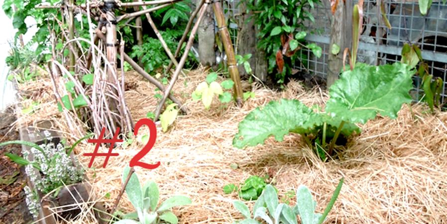 Jardinage au naturel #2 - Ecos