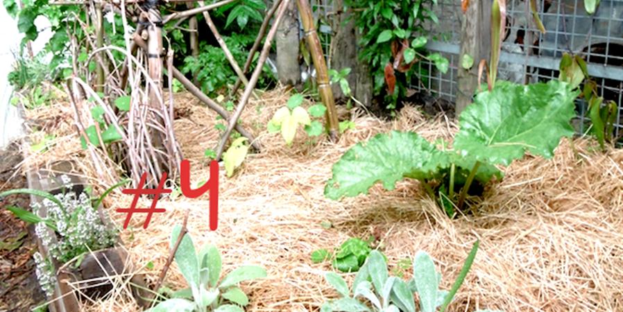 Jardinage au naturel #4 - Ecos