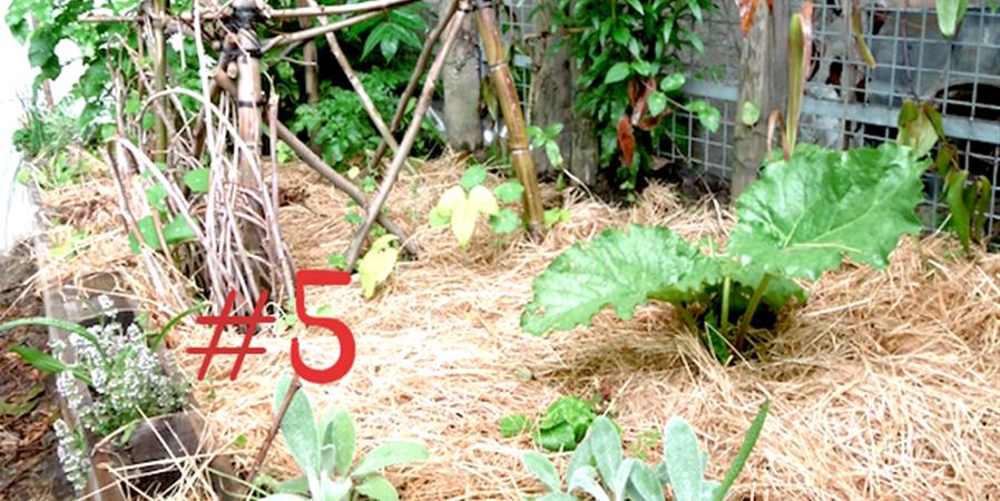 Jardinage au naturel #5 - Ecos
