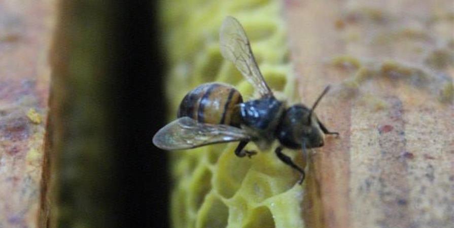 ATELIER COMPLET le 7 avril Découvrez le rucher de la vallée des éclusiers - a contre canal