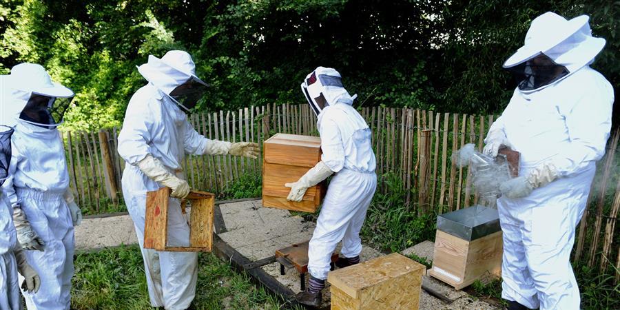 Initiation à l'apiculture écologique (Juillet 2019) - Bagneux Environnement