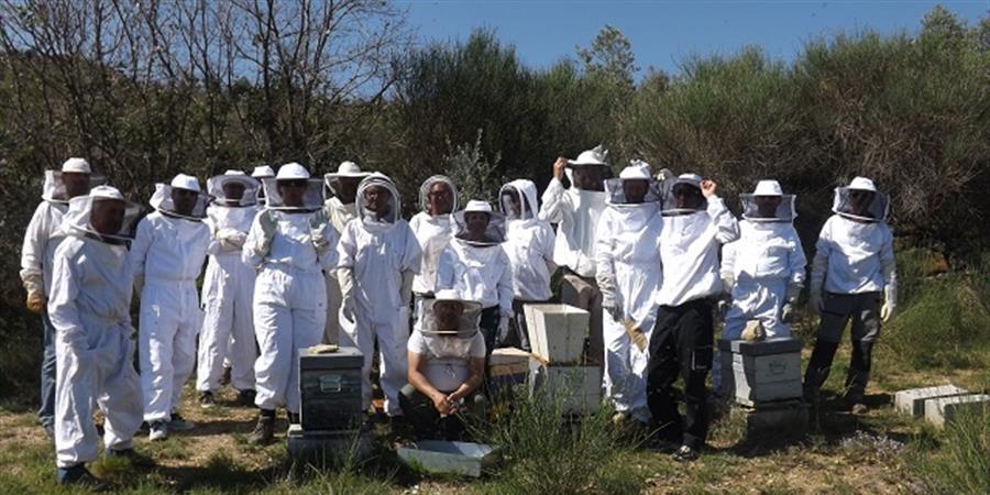 Stage d'initiation à l'apiculture - AM'API04 Association des Apiculteurs Amateurs de Haute Provence