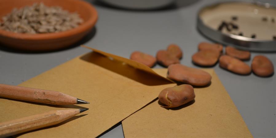 Commande groupée de graines (réservée aux adhérent-e-s) - Ecos