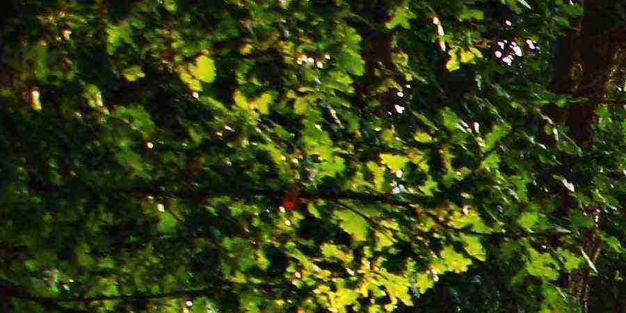 Découverte des arbres et arbustes de nos collines ; la haie naturelle - Maison de la Nature Bruche Piémont