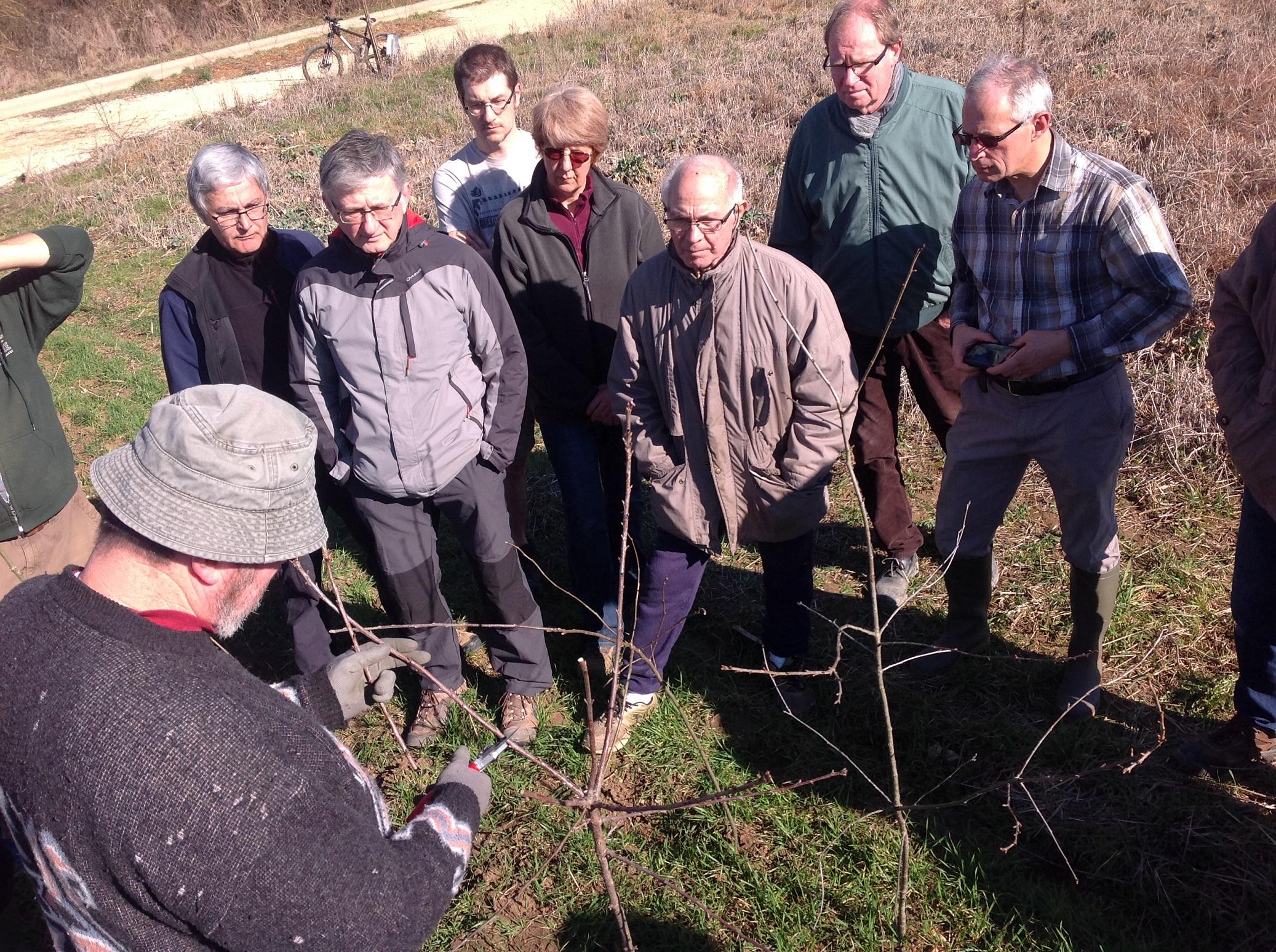 Découverte de la taille au verger conservatoire de Bretigny - Association Plantons le décor