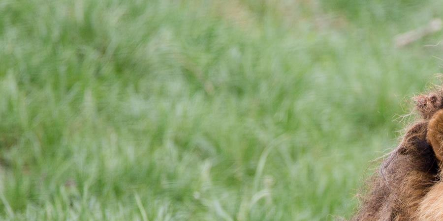 Journée des Espèces Menacées 30 mai 2019 - La Passerelle Conservation