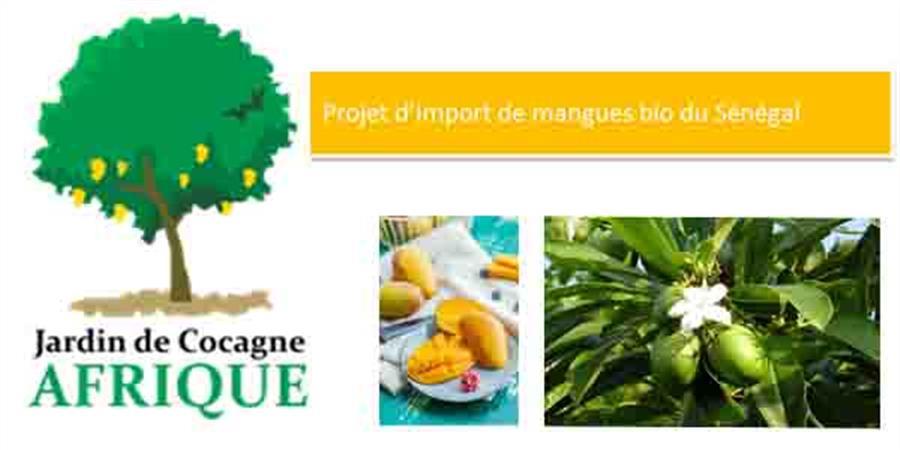 Export de mangues Bio par le Jardin de Cocagne Afrique(JACAF) 2e édition - Solidarité & Initiative