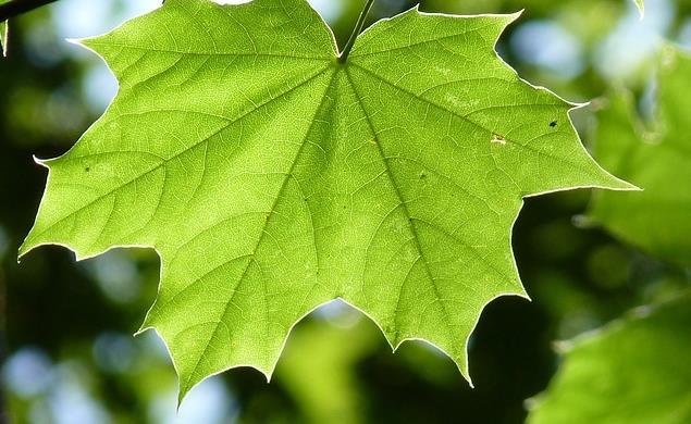 Atelier Fabriqu'O'Naturel : Les plantes et Impression sur tissu - Bagneux Environnement