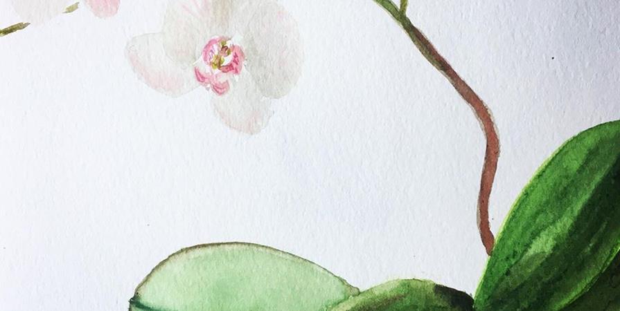 Atelier Aquarelle botanique - Les orchidées - Watercolor in Arras
