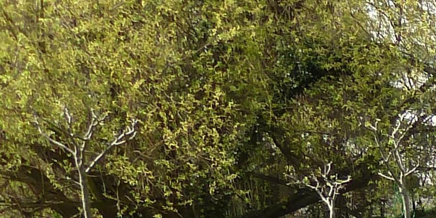Visite du rucher écologique de Bagneux - Bagneux Environnement