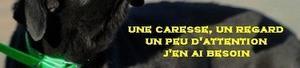 PARRAINAGE - Refuge Annie-Claude MINIAU - ADPA