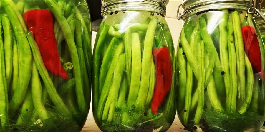 Atelier Aliments Fermentés         Wild Pickle Workshop - Sous-bois