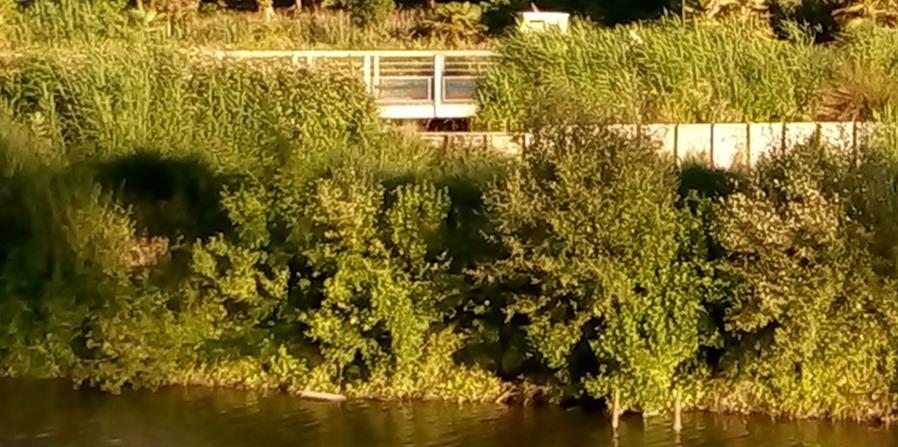 Sortie nature : de la Ria au Canal de la Haute Perche - Association Hirondelle