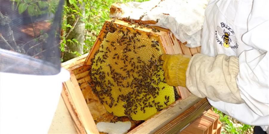 Stage d'apiculture naturelle 23/24 mai 2020 - 1001 Abeilles