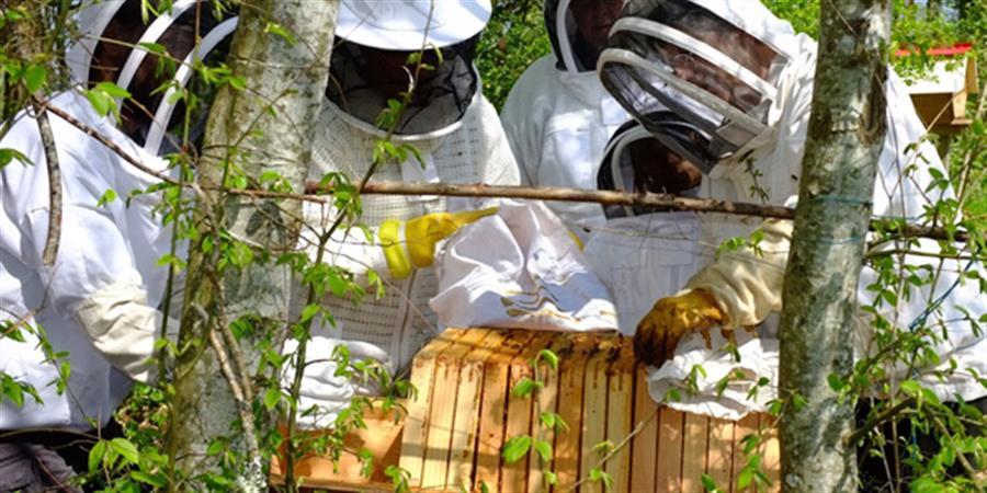 Stage d'apiculture naturelle 30/31 mai 2020 - 1001 Abeilles