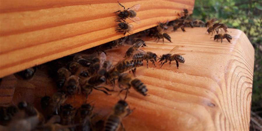 Stage d'apiculture naturelle 18/19 juillet 2020 - 1001 Abeilles