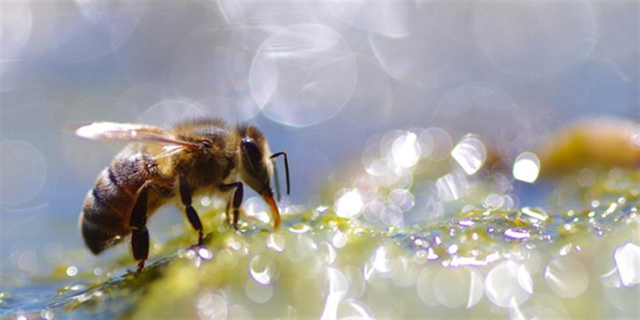 Stage d'apiculture naturelle 19/20 septembre 2020 - 1001 Abeilles