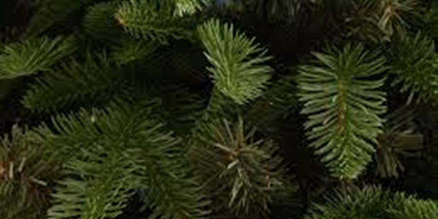 Achetez votre sapin de Noël et soutenez l'école Garonne-Pyrénées - ATEFIP