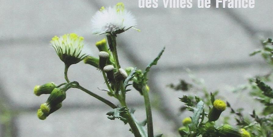 #8 Découvrir les plantes sauvages des bitumes - Reflets - CPIE Terre Toulousaines