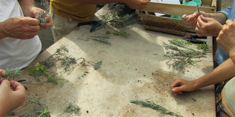 """Stage """"produire ses graines et plants"""" - 29 et 30/08/2019 - Conservatoire National des Plantes à Parfum, Médicinales et Aromatiques"""