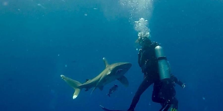Conférence interaction avec les requins  - Oxygène PSA - Plongée