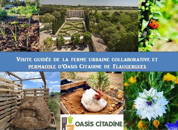 Visite guidée de la ferme urbaine et permacole d'Oasis Citadine de Flaugergues - Oasis Citadine