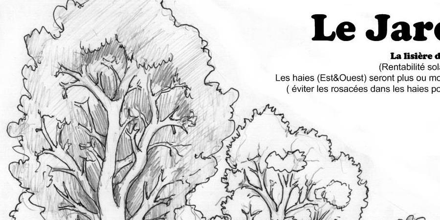 AOUT19-Verger Permaculturel et Haies Fruitières  - la foret nourriciere