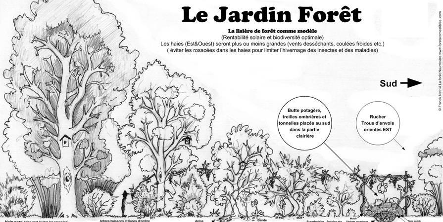 Mai 2020 - Verger Permaculturel et Haies Fruitières - la foret nourriciere