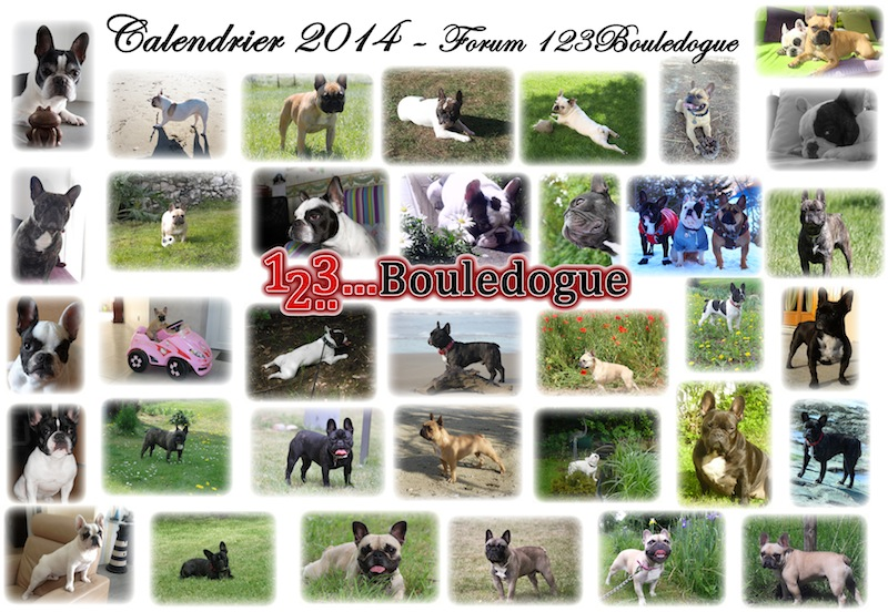 Calendrier 2014 1.2..3...Bouledogue