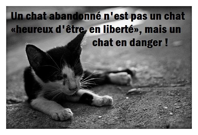 chat en danger