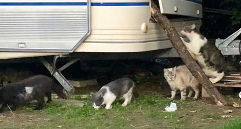 Sauvetage de la ferme de Cinquante : 62 chats récupérés en 2 semaines par 2 bénévoles seulement