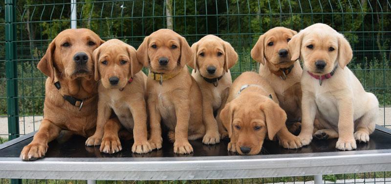élèves chiens guides