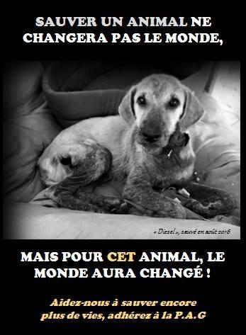 Protection Animale De Guyane Helloasso