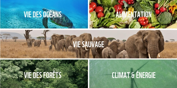 Nos champs d'action - WWF France