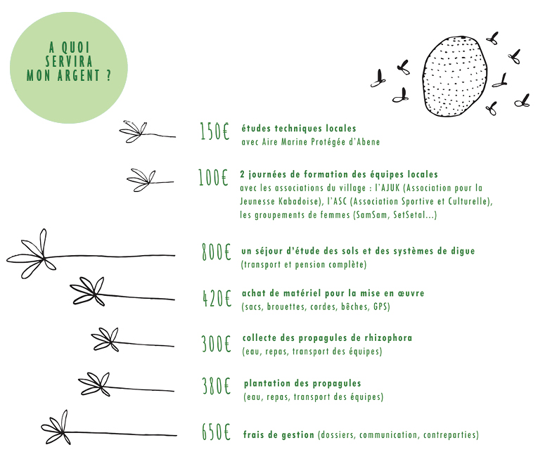 Reboisement Kabadio Casamance À De La En Mangrove OXZkPiTu