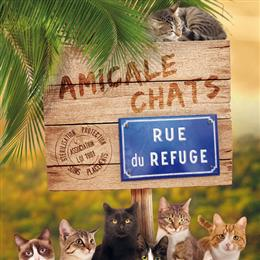 amicalechats
